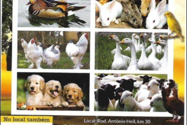 Feira de Aves e Pequenos Animais